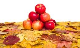 Maçãs e folhas de outono no branco Fotografia de Stock