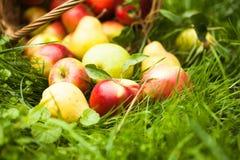 Maçãs e peras na grama Fotos de Stock Royalty Free