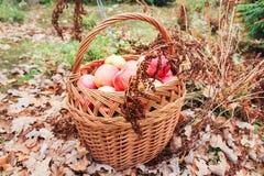 Maçãs e plantas secadas Fotografia de Stock Royalty Free
