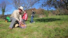 Maçãs felizes da colheita da família e colocação dentro da cesta video estoque