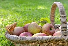 Maçãs frescas em uma cesta Fotografia de Stock Royalty Free