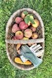 Maçãs frescas em uma cesta Fotos de Stock Royalty Free