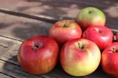Maçãs frescas orgânicas no fundo de madeira no verão, tema do conceito da agricultura com as maçãs frescas na natureza Foto de Stock