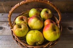 Maçãs maduras do outono na cesta Fotografia de Stock