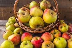 Maçãs maduras do outono na cesta Fotografia de Stock Royalty Free