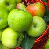 Maçãs maduras frescas em uma cesta Foto de Stock