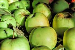 Maçãs maduras verdes na luz solar Fotografia de Stock