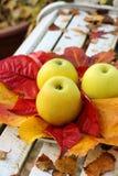 Maçãs maduras, verdes no jardim, tempo do outono Imagens de Stock