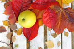 Maçãs maduras, verdes no jardim, tempo do outono Imagens de Stock Royalty Free