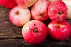 Maçãs maduras vermelhas Foto de Stock