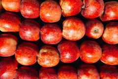 Maçãs maduras vermelhas muito fundo Imagens de Stock