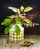 Maçãs maduras vermelhas pequenas Ranetki no ramo verde Imagens de Stock
