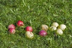 Maçãs na grama Foto de Stock