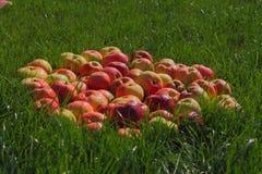 Maçãs na grama, Fotografia de Stock