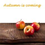 Maçãs na tabela de madeira sobre o landsape do outono Imagens de Stock