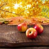 Maçãs na tabela de madeira sobre o landsape do outono Foto de Stock
