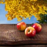Maçãs na tabela de madeira sobre o landsape do outono Foto de Stock Royalty Free