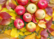 Maçãs nas folhas de outono imagem de stock royalty free