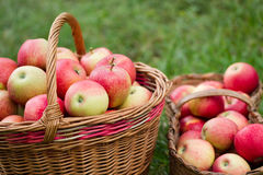 Maçãs orgânicas em uma cesta ao ar livre Foto de Stock