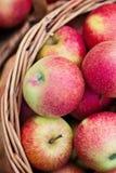 Maçãs orgânicas em uma cesta ao ar livre Imagem de Stock