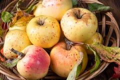 Maçãs orgânicas frescas e saborosos em uma cesta imagens de stock