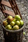 Maçãs orgânicas no tomado sol Fotos de Stock
