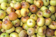Maçãs orgânicas verdes para a venda no mercado de fruto Imagem de Stock Royalty Free