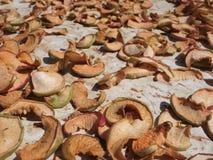 Maçãs secadas Frutos secos Imagem de Stock Royalty Free