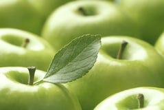 Maçãs verdes Fotografia de Stock Royalty Free