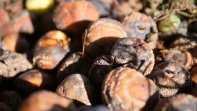 Maçãs verdes, amarelas e vermelhas muito podres na terra Autumn Organic Fruit Harvest vídeos de arquivo