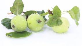 Maçãs verdes com folhas em um fundo branco e em um respingo da água clara limpa video estoque
