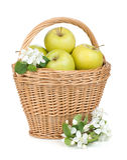 Maçãs verdes maduras frescas na cesta Fotografia de Stock Royalty Free