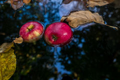 Maçãs vermelhas e folhas de outono amarelas Imagem de Stock