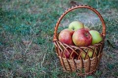 Maçãs vermelhas em uma cesta em uma grama seca Foto de Stock