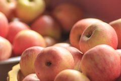 Maçãs vermelhas na terra, maçãs frescas Imagem de Stock Royalty Free