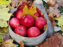Maçãs vermelhas nas folhas de outono Imagem de Stock