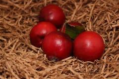 Maçãs vermelhas no papel Foto de Stock Royalty Free