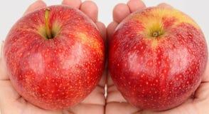 Maçãs vermelhas realizadas nas mãos fotografia de stock royalty free