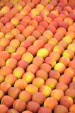 Maçãs Vermelho-amarelas Foto de Stock Royalty Free