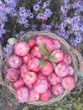 maçãs vermelho-fervidas fotos de stock