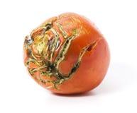 Mán tomate con las cicatrices aisladas imagenes de archivo