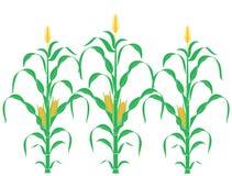 maíz abstracto 60208117 libre illustration