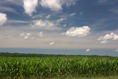 Maíz de Indiana Imagenes de archivo