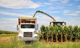 Maíz de la cosecha de los granjeros fotografía de archivo libre de regalías