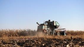 Maíz de la cosecha mecanizada en un campo de granja metrajes