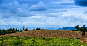 Maíz de la granja Foto de archivo libre de regalías