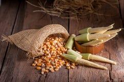 Maíz de semilla y maíz de bebé en fondo de madera de la tabla Imagen de archivo libre de regalías