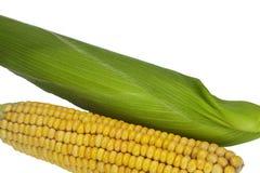Maíz del maíz Imagen de archivo libre de regalías