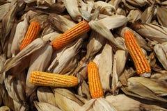 Maíz del maíz Imagenes de archivo