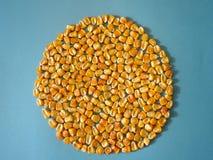 Maíz del maíz Imagen de archivo